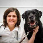 Veterinarian in Etobicoke