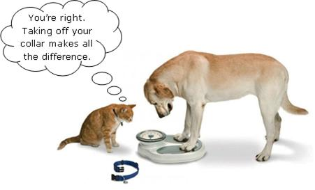 cat  dog  weigh scale