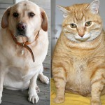 fat dog and cat