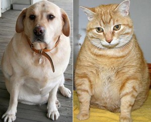 1 Fat dog and cat