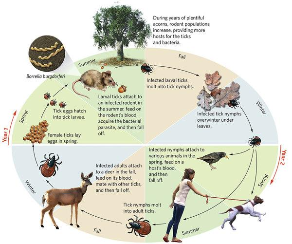update protecting you and your dog from ticks toronto